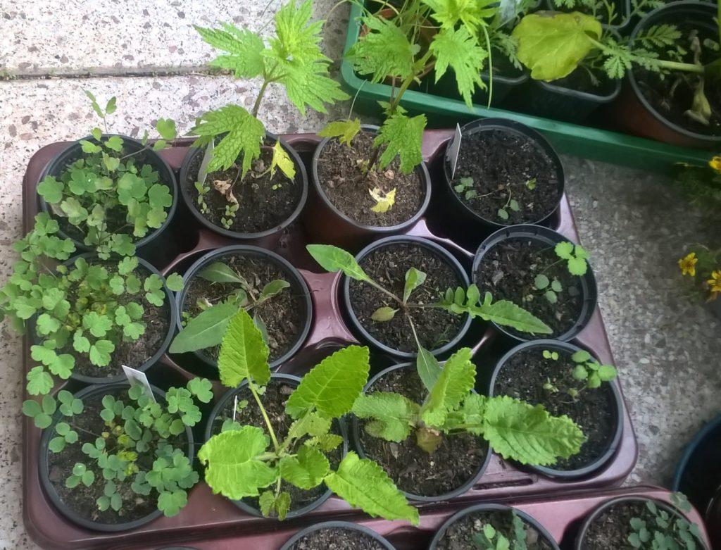 Unsere Pflanzen vom Projekt Urbanität & Vielfalt am Start des Projektes.