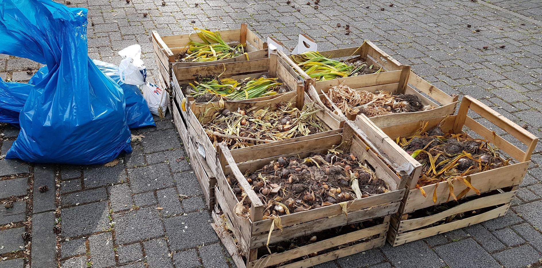 Read more about the article Städtische Blumenzwiebeln angekommen
